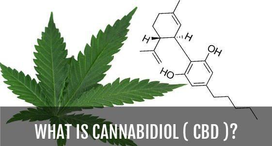 what-is-cannabidiol