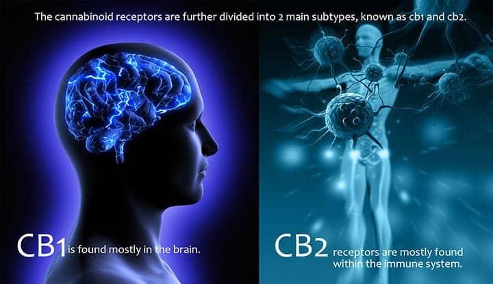 CBD Consumption & Impact