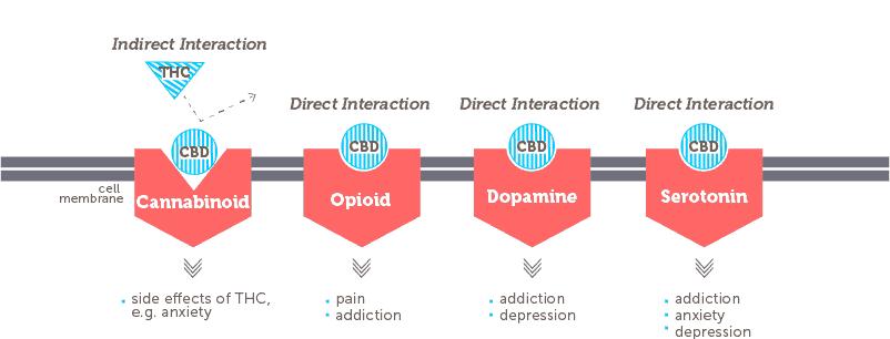 cbd receptor system