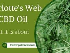 Charlotte's Web CBD Oil