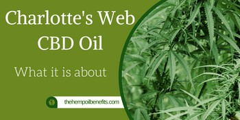 Charlotte's Web CBD Oil – What it is about