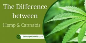 Difference between Hemp and Cannabis