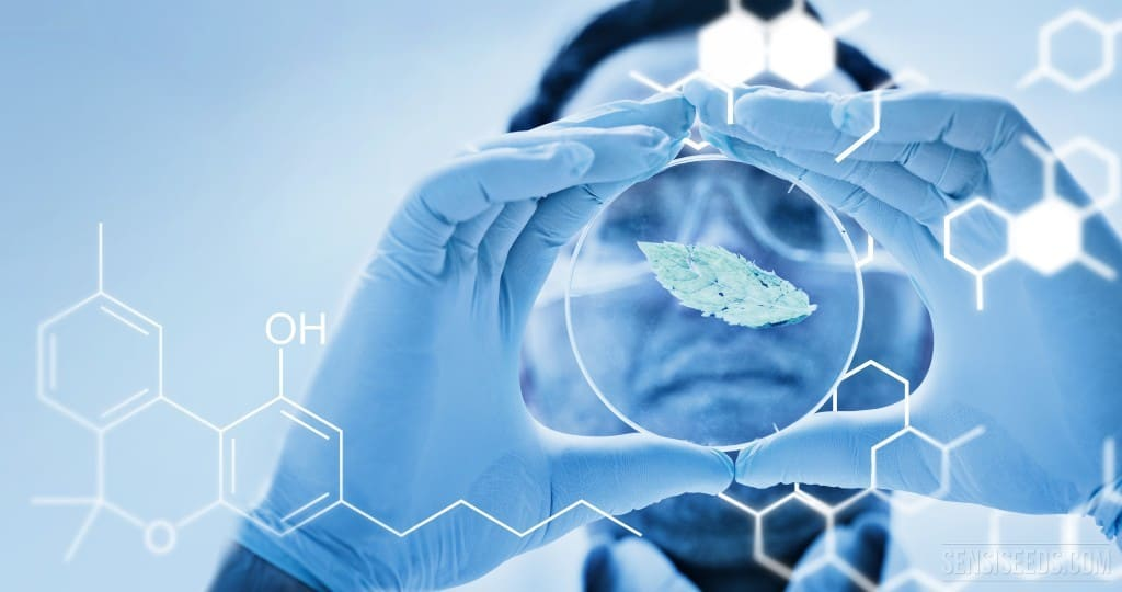 Research of CBD againts Antibiotic Resistant Bacteria