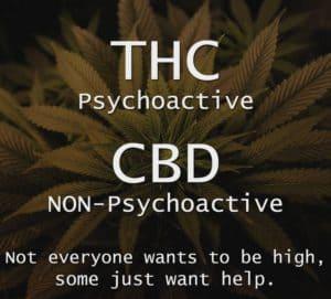 cbd not thc