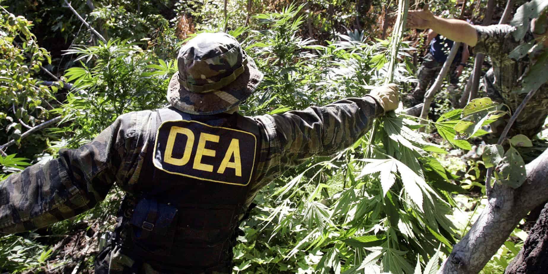 DEA medical marijuana