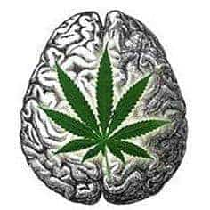 CBD Brain