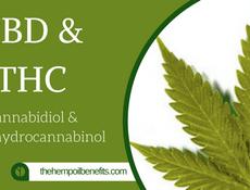 CBD & THC