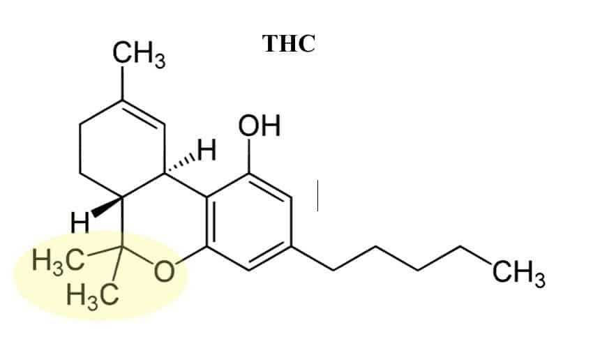 THC-tertahydrocannabinol