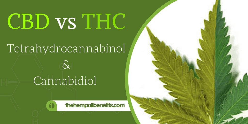 cbd thc cannabidiol tetrahydrocannabinol the hemp oil benefits