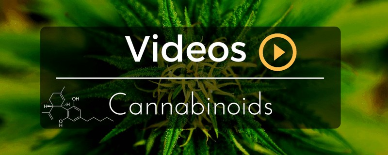 Videos Cannabinoids