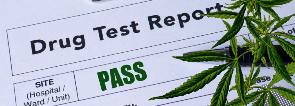 cannabis-drug-testing