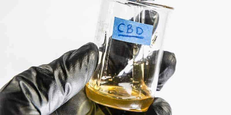 cbd-oil studies