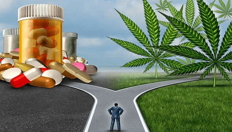 where-to-start-when-considering-CBD-Oil