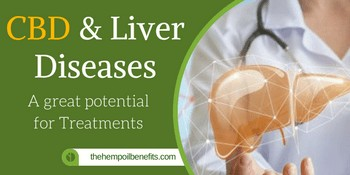 CBD & Liver Diseases – A great potential for Treatments