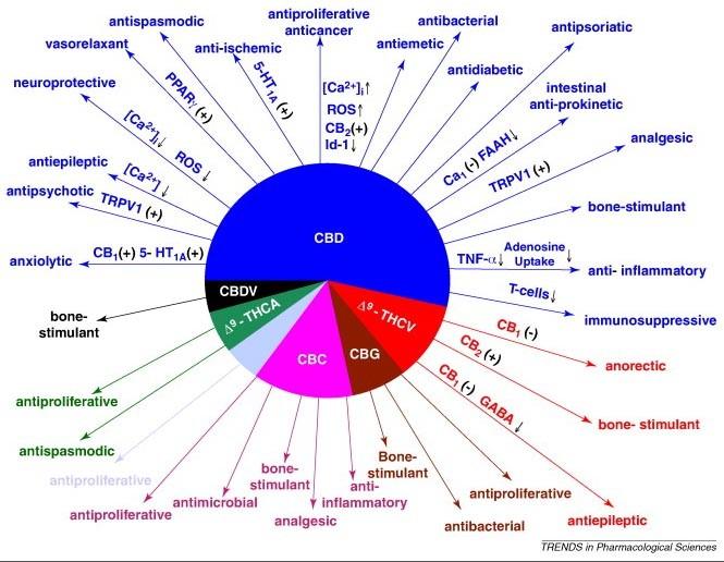 cannabinoids cbd health properties