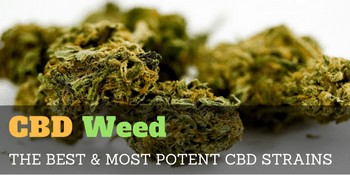 CBD Weed – the best & most potent CBD strains