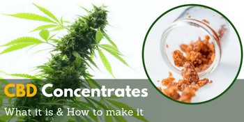 CBD Concentrates – What it is and how to make it