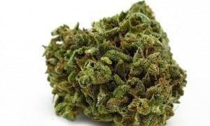 CBD Weed - the best & most potent CBD strains - The Hemp Oil