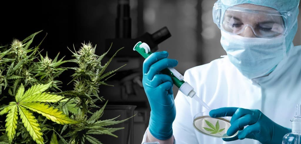 CBD for Spasms: The Research for a solution