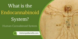 what is the endocannabinoid system2