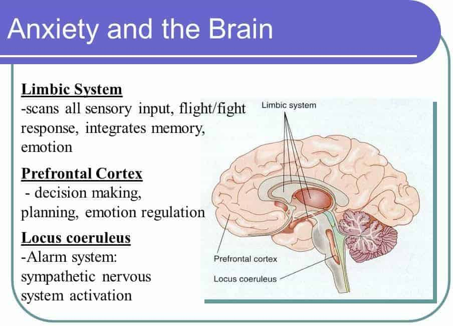 The role of the limbic system in anxiety