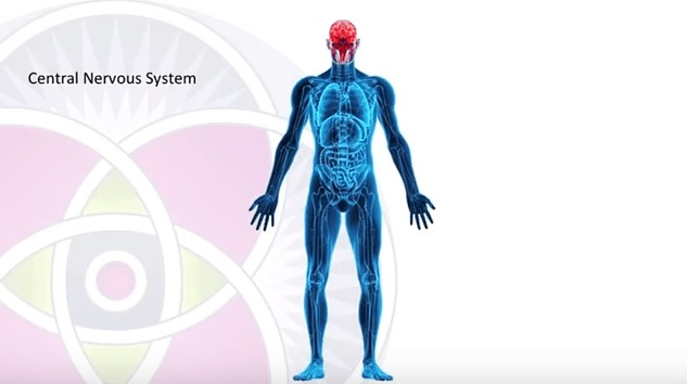 CBD Receptors in central nervous system