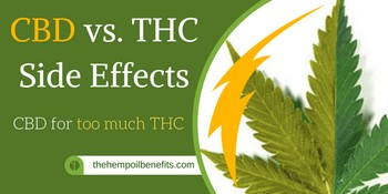 CBD vs THC effects – CBD for too much THC