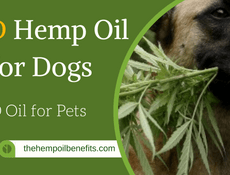 CBD Hemp Oil for Dogs FI