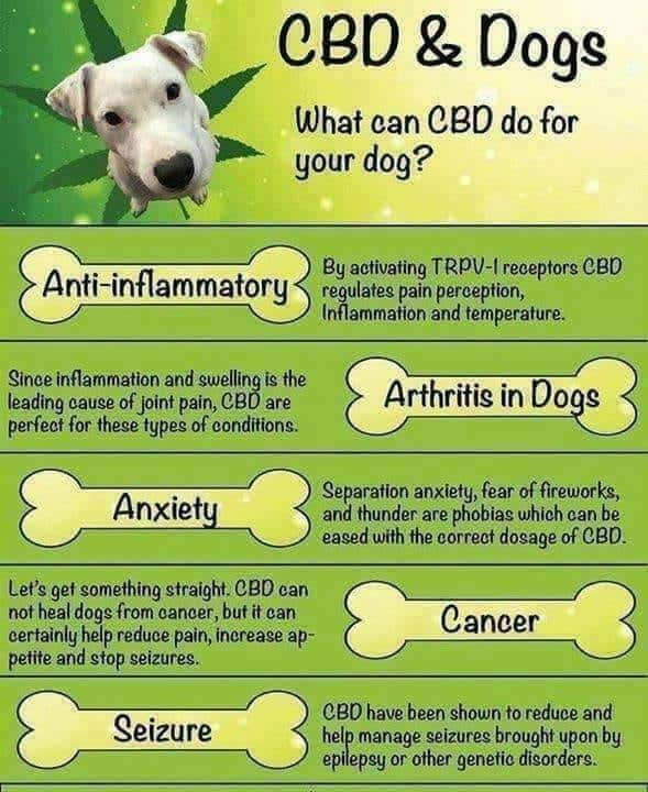CBD for dogs Info