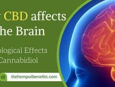 How CBD affects the Brain – The Neurological Effects Of Cannabidiol