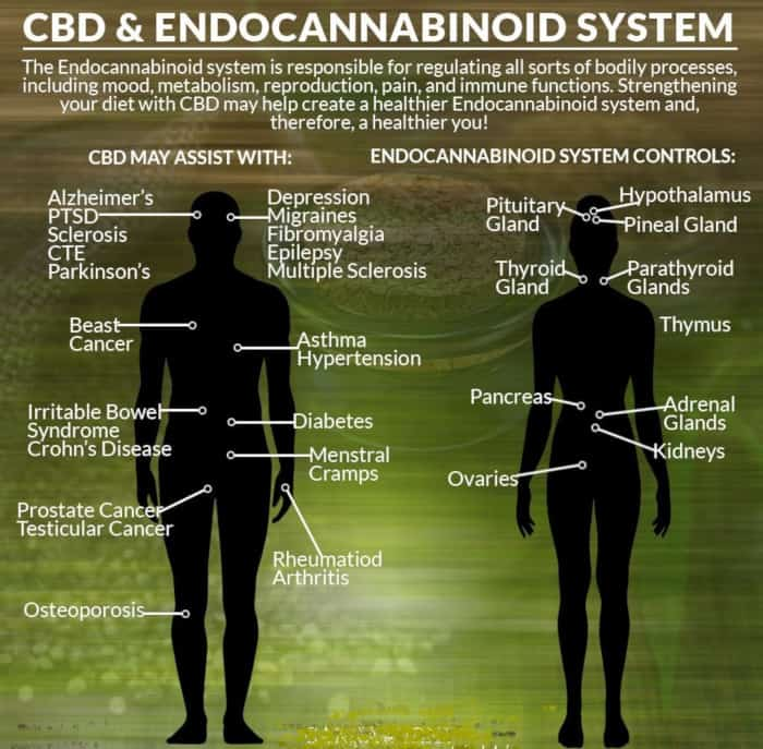 CBD Immune system