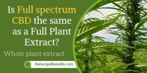 Is Full spectrum CBD Oil the same as a Full Plant Extract?