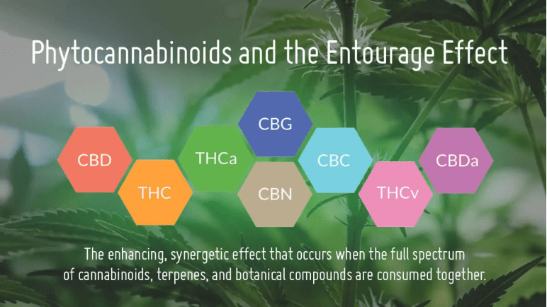 Entourage effect of cannabinoids and terpenes