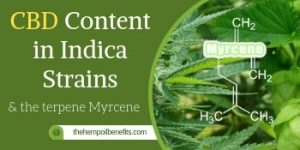 CBD Content in Indica Strains & the terpene Myrcene FI