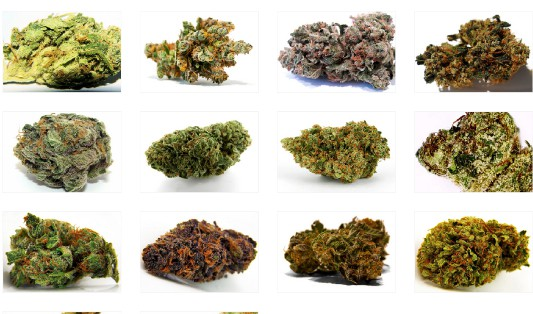 Different Cannabis Strains - Different Terpene Profiles