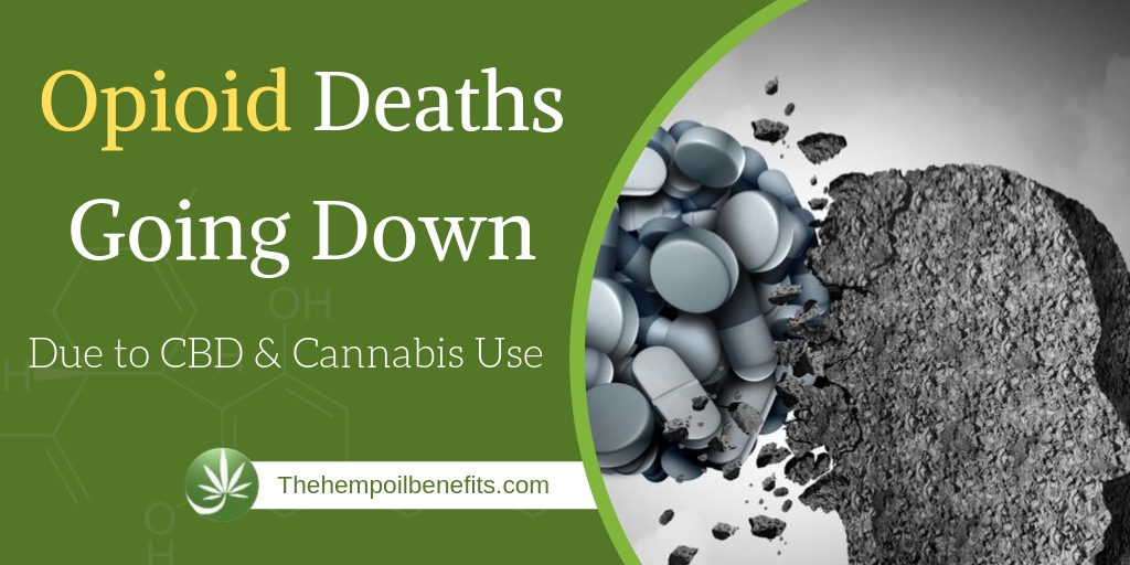 Opioid Deaths Going Down Significantly Due to CBD & Cannabis Use