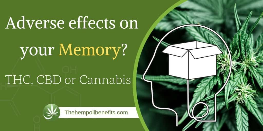 Does THC, CBD or Cannabis have adverse effects on your Memory?