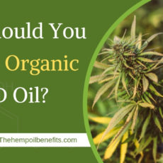 Why Should You Choose Organic CBD Oil?