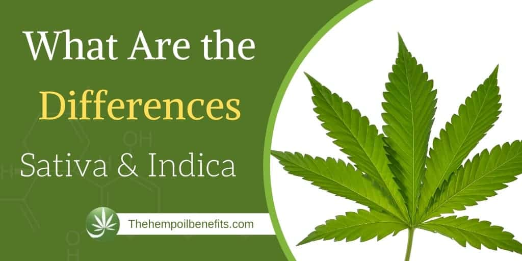 What Are the Differences between Cannabis Indica and Cannabis Sativa