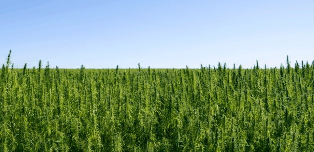 How can hemp impact your health?