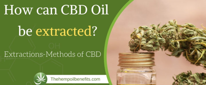 How can CBD Oil be extracted