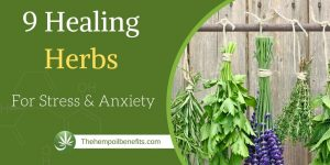 9 Healing Herbs for Stress and Anxiety