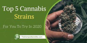 Top-5-Cannabis-Strains-For-You-To-Try-In-2020