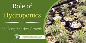 Role-of-Hydroponics-in-Hemp-Market-Growth